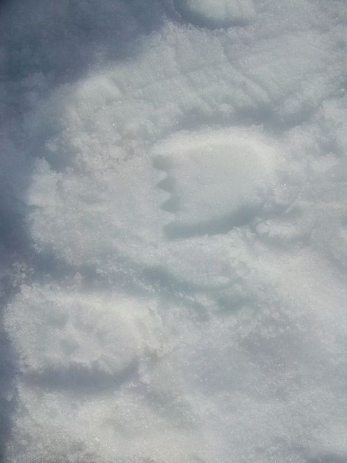 Snow days_0114